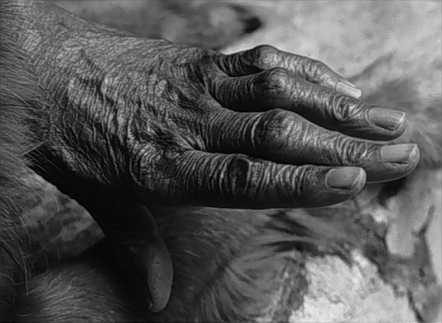 Black & white photograph of an old black woman's hand.