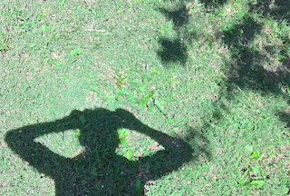 Color photograph of an area of short grass and herbs shows the shadow upward of the upper torso of a person holding something up to their head at eye level, arms spread wide.
